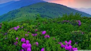 green-mountains_00449537